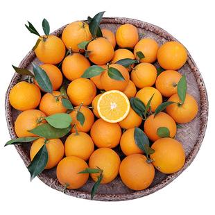 现摘现发  橙子新鲜高山鲜橙