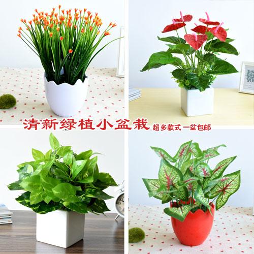 假植物盆景绿植塑料盆栽绿萝装饰仿真小绿植盆栽室内仿真植物包邮