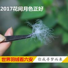羽绒原料90%白鸭绒鹅绒大朵 羽绒被羽绒服填充物新国标90羽绒 散装