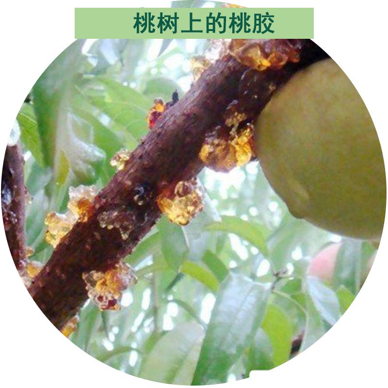 食用桃胶配皂角米 桃胶干货 特级 500g 天然野生桃胶 云南桃胶