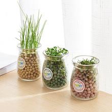水培盆栽创意办公室DIY负离子小盆景 桌面迷你可爱草微景观小植物