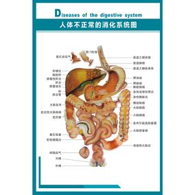 内脏结构图人体解剖图