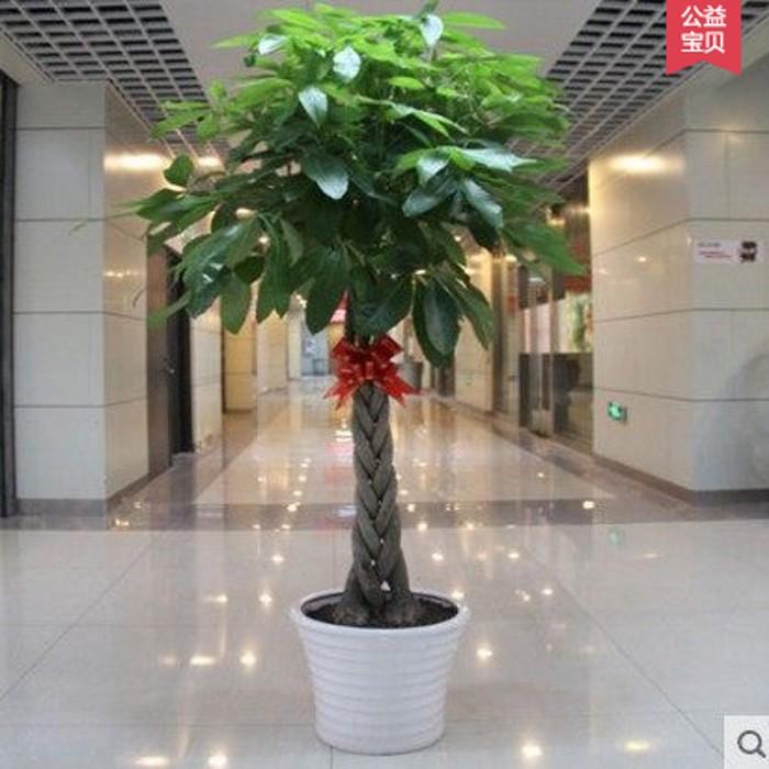 发财树盆栽盆景植物室内花卉客厅创意花草办公室大型