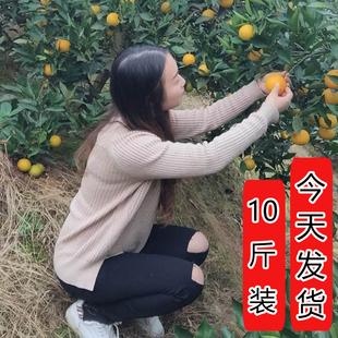 10斤包邮橙子新鲜水果湖南麻阳非永兴赣南脐橙黔阳柑橘蜜桔冰糖橙
