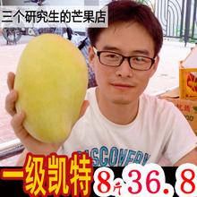 【5斤送3斤】攀枝花凯特芒果大青芒新鲜水果厦门大芒果非桂七贵妃