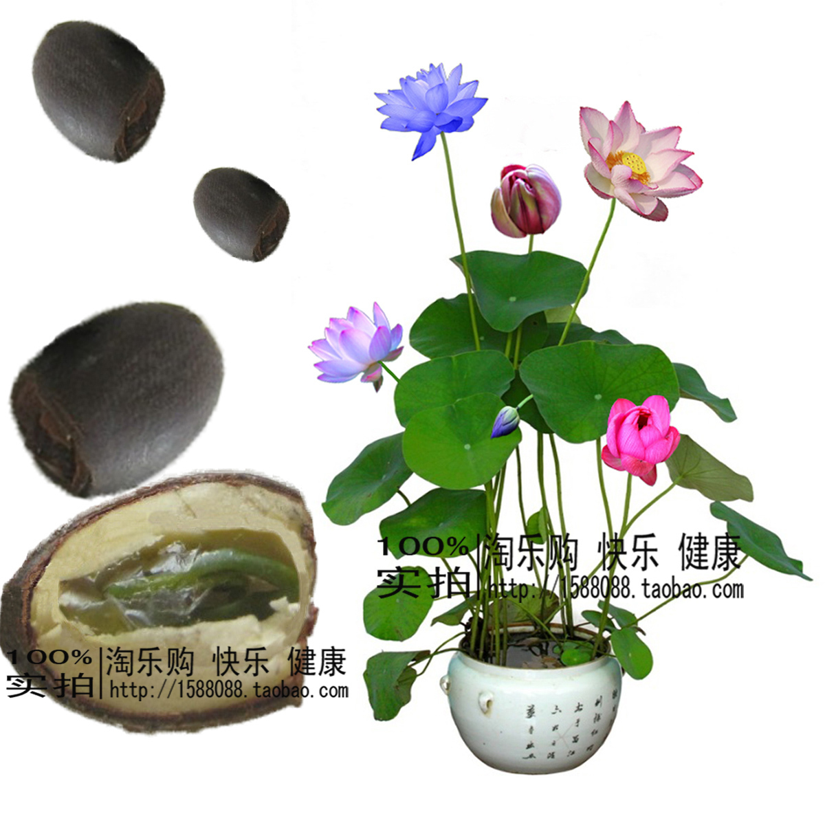 水生水培花卉植物盆栽荷花莲花碗莲种子包邮四季多肉植物多肉景观
