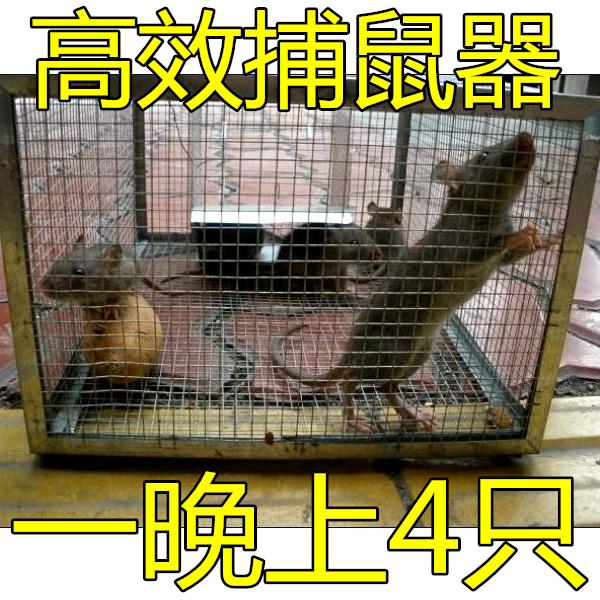 扑鼠笼结构图片