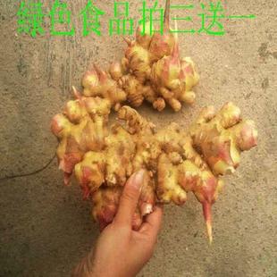 姜纯天然 新鲜生姜农家有机特产岳西无污染生姜驱寒生姜1000g包邮