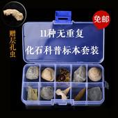 天然10种古生物化石标本盒三叶虫化石琥珀原石奇石摆件石头礼品