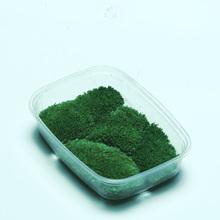 鲜活白发藓干苔藓青苔藓石头 天然大灰藓铺面青苔 朵朵藓苔藓植物