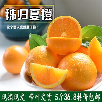 现摘夏橙新鲜水果小孩孕妇榨汁新
