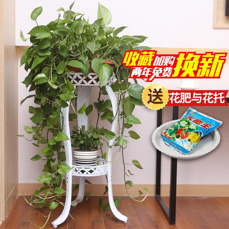 欧式花架铁艺多层阳台花架子室内绿萝花盆架子吊兰多功能地面特价