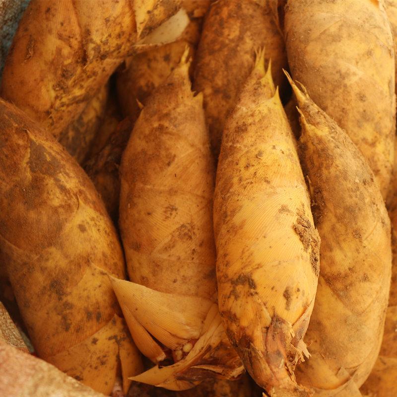 野生冬笋有机食品 2014年新鲜竹笋现挖现卖土特产  5斤包邮
