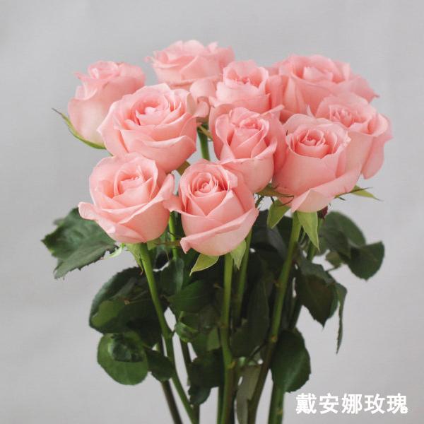 玫瑰花批发包月上海鲜花速递38妇女节,1扎包邮,限苏浙沪皖