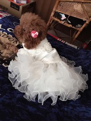 春夏绣花蕾丝裙宠物猫狗婚纱猫咪公主狗狗衣服宠物衣服Dog dress