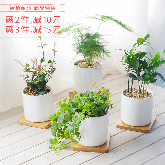 办公桌简约植物摆件室内