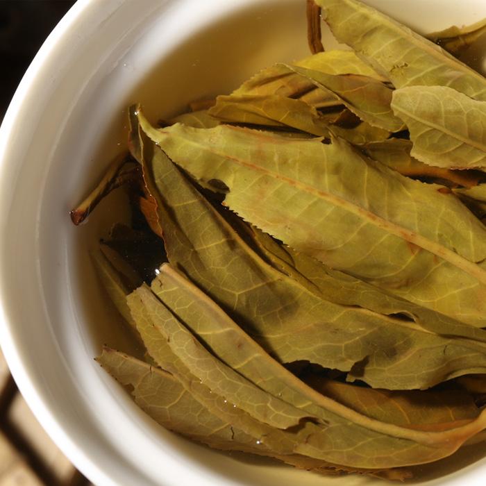 收藏珍品 年易武茶王树 2011