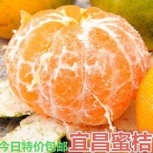 橘子水果青橘子新鲜水果5斤包邮现摘现发新鲜柑橘新鲜桔子蜜桔子