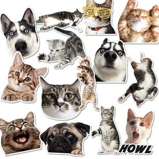 高清动物滑板图片