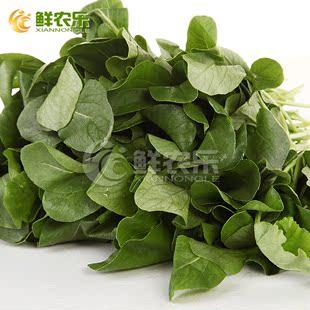 【鲜农乐】农家鸡毛菜250g 叶菜净菜 新鲜蔬菜 鸡毛菜火锅食材