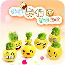 办公室迷你植物盆栽 青草种植QQ表情愤怒小鸟栽培草头娃娃