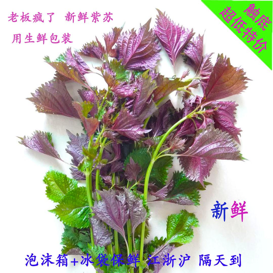 衢州特产纯天然野生紫苏叶干2015年紫苏叶去腥烧鱼虾蟹香料(带茎)